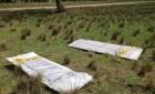 asbestos-dumping