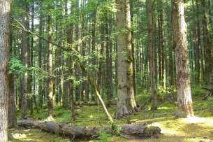China Opts for National Forests Standard