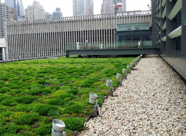 What is Green Roof Maintenance?