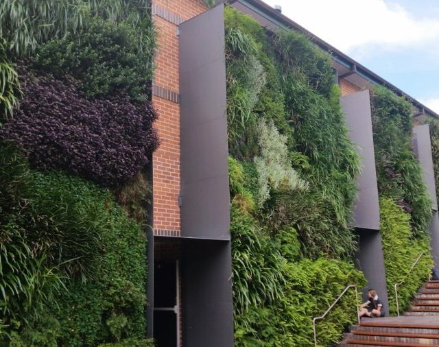 The Importance of Living Infrastructure in Schools