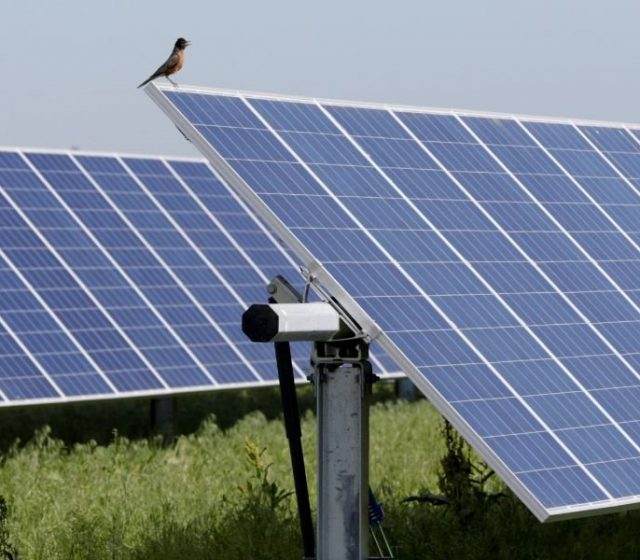 Clean energy investment falling: report